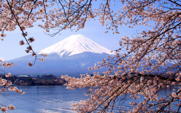 Mt Fuji and Sakura