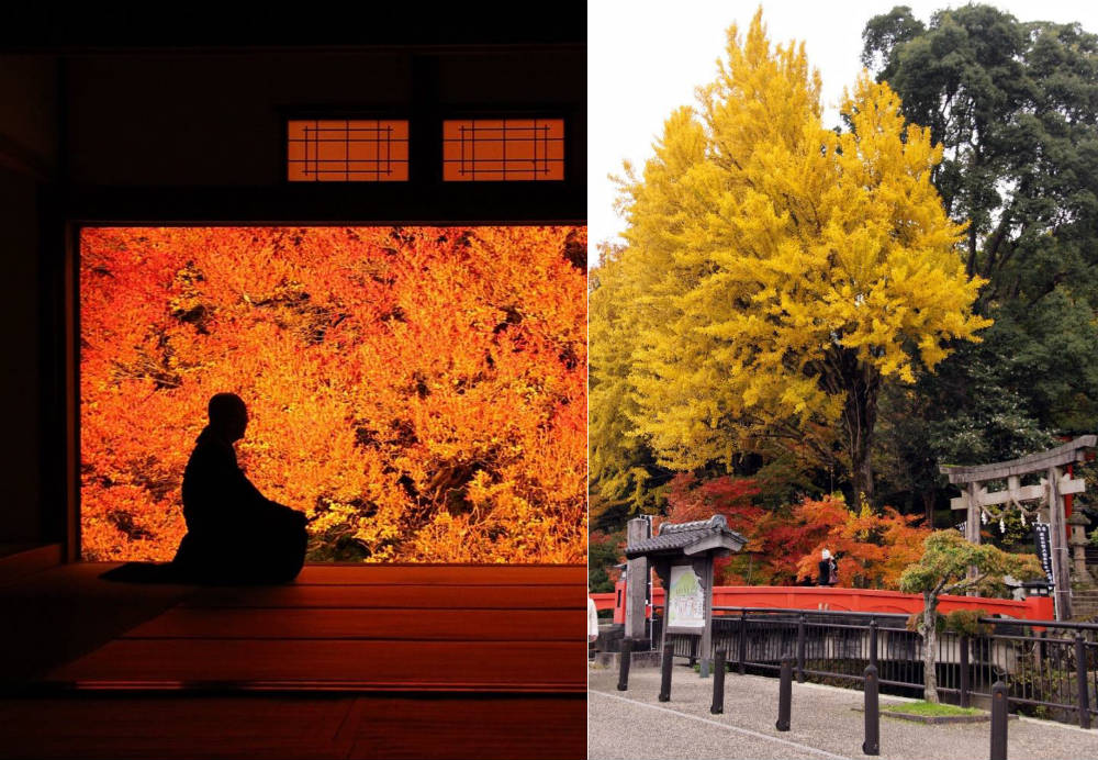 Autumnal colors at Ankokuji in Tanto