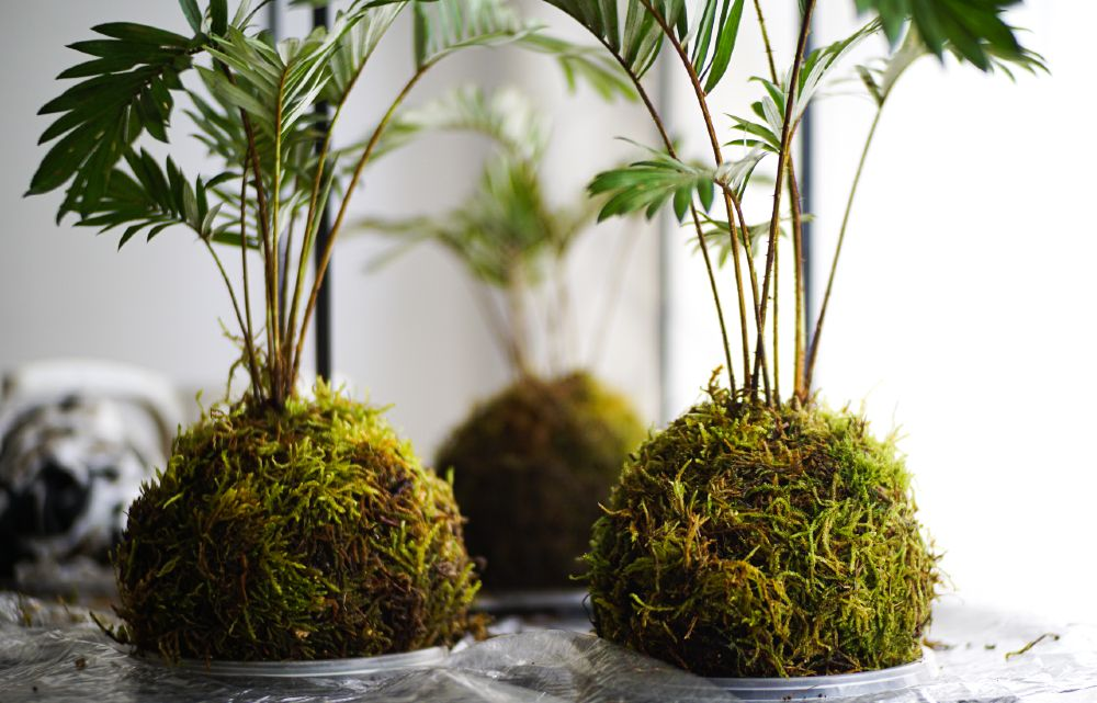 Compact but vibrantly alive, Kokedama plants are perfect for a minimalist Japanese home.