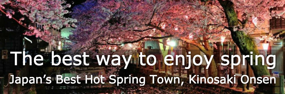 Magical Cherry Blossom Experience off the Beaten Path at Japan's Best Hot Spring Town, Kinosaki Onsen.