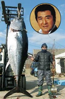 Matsukata Hiroki, Giant Maguro