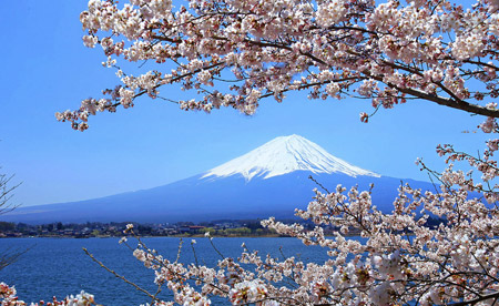Sakura, Cherry Blossoms, Mt. Fuji