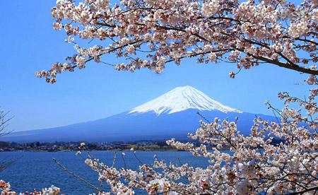 Sakura, Cherry Blossoms, Mt. Fuji